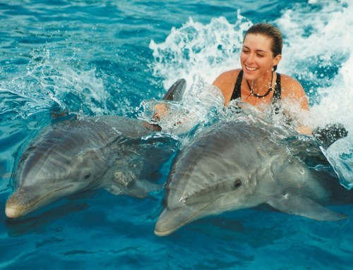 Dolphin's Therapy